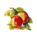 Apples  - #AORAB112  -  PRINT