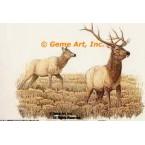 Elk & Doe  - #BOR1  -  PRINT