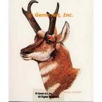 Pronghorn Antelope  - #BOR10  -  PRINT