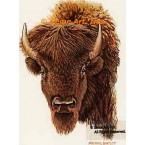 Buffalo  - #BOR12  -  PRINT