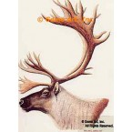 Caribou  - #BOR14  -  PRINT