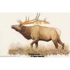Elk  - #BOR2  -  PRINT