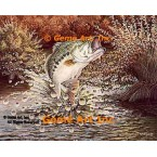 Large Mouth Bass  - #BOR23  -  PRINT