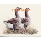 Geese  - #BOR25  -  PRINT
