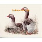 Geese  - #BOR26  -  PRINT