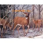 White Tailed Deer  - #BOR31  -  PRINT