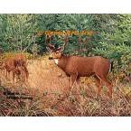 Deer  - #BOR33  -  PRINT