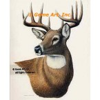 White-Tailed Deer  - #BOR43  -  PRINT