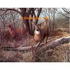 White Tailed Deer  - #BOR52  -  PRINT