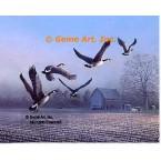 Geese Over Farm Field  - #BOR54  -  PRINT