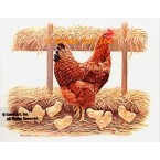 Hen & Chicks  - #BOR6  -  PRINT