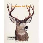 Mule Deer Buck  - #BOR9  -  PRINT