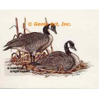 Canadian Geese  - #COR10  -  PRINT