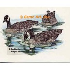 Canadian Geese  - #COR11  -  PRINT