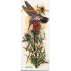 Hummingbird With Thistle  - COR118  -  PRINT