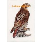 Hawk  - #COR119  -  PRINT