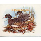 Wood Ducks  - #COR40  -  PRINT