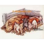 Pigs  - #COR44  -  PRINT