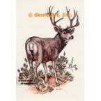 Deer  - #COR48  -  PRINT