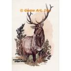 Elk  - #COR49  -  PRINT