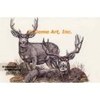 Deer  - #COR50  -  PRINT