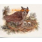 Owl Family  - COR51  -  PRINT