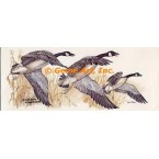 Canadian Geese  - #COR59  -  PRINT