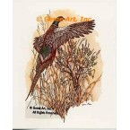 Pheasant  - #COR62  -  PRINT