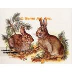 Rabbits  - COR67  -  PRINT