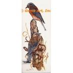 Western Bluebirds  - #COR80  -  PRINT