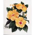 Yellow Hibiscus  - #ZOR1003  -  PRINT