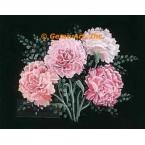 Carnations  - #ZOR1007  -  PRINT