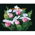 Lady's Slippers  - #ZOR1009  -  PRINT