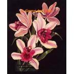 Elegant Orchids  - #ZOR1012  -  PRINT