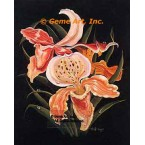 Orchids  - #ZOR1013  -  PRINT