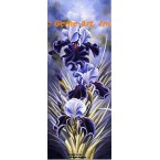 Blue Mist Iris  - LOR617  -  PRINT