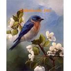 Bluebird  - #ROR424  -  PRINT