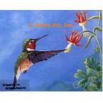 Allen's Hummingbird  - ROR426  -  PRINT
