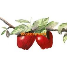 Apples  - #MOR732-1  -  PRINT