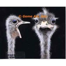 Ostrich Heads  - #MOR711  -  PRINT