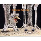 Ostriches  - #MOR712  -  PRINT