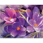 Purple Primrose  - #MOR740  -  PRINT