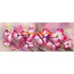 Pink Dogwood  - #MOR741  -  PRINT