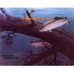 Rainbow Trout  - #QOR12  -  PRINT