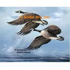 Canadian Geese  - #QOR24  -  PRINT