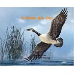 Canadian Geese  - #QOR26  -  PRINT