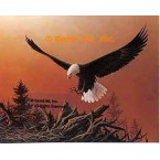 Eagle In Flight  - #QOR3  -  PRINT