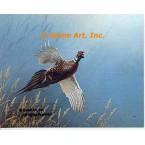 Pheasant  - #QOR31  -  PRINT