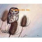 Saw Whet Owl  - #QOR35  -  PRINT