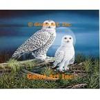 Snow Owl  - #QOR36  -  PRINT